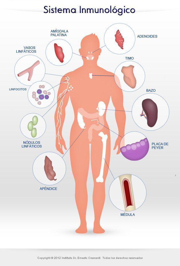El-sistema-inmunologico-Univergia